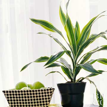 Find the Perfect Houseplant