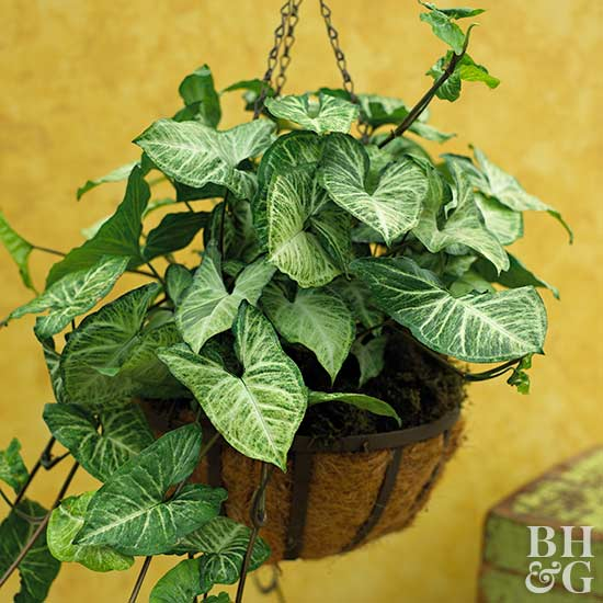 picture house plants vines