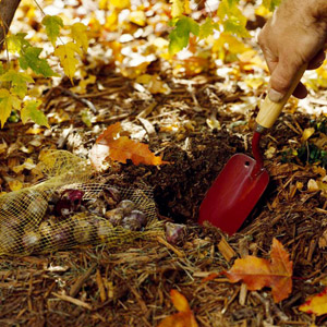 November Gardening Tips for the Pacific Northwest