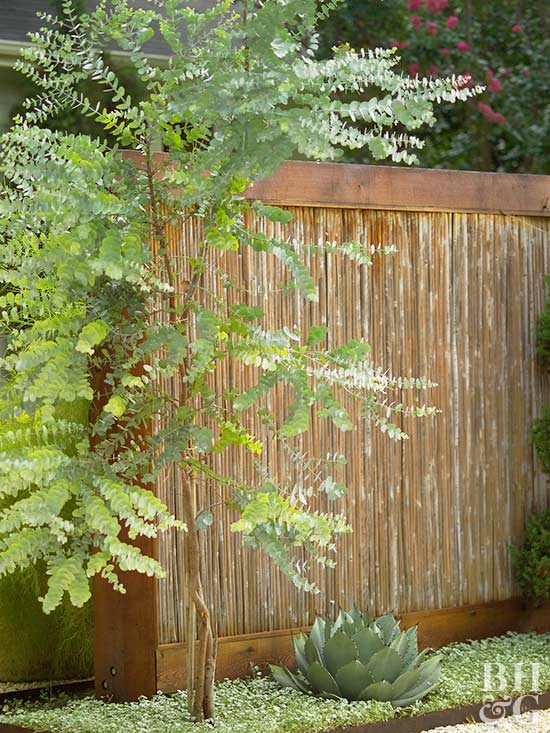 Eucalyptus - Trees for shade in small spaces concept ...