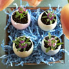 Egg Planter