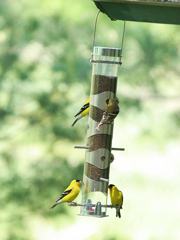 Bird Feeders Buying Guide