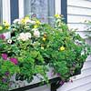 Plant a Window Box for Butterflies