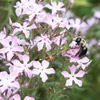 Plant Flowers for Pollinators