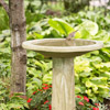 Provide a Birdbath