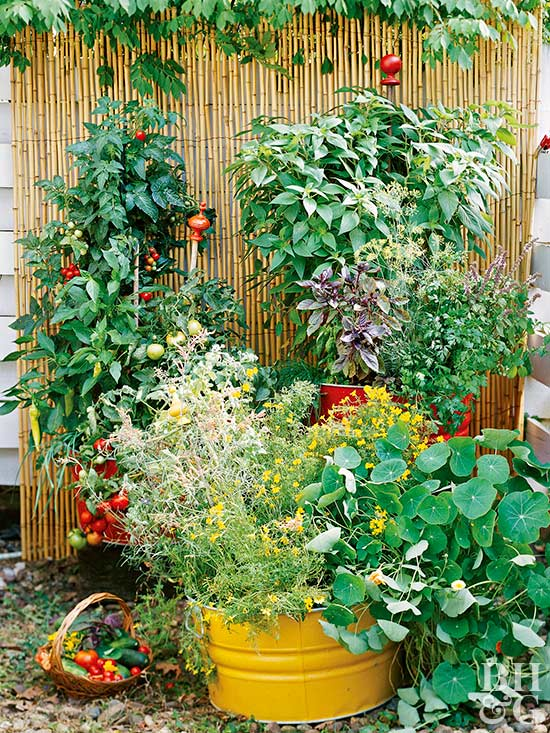 Vegetable Garden Ideas a backyard vegetable garden plan for an 8 x 12 space from better Determining How Much Space You Need