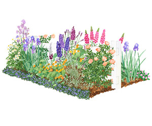 Tips For Designing Perennial Beds And Borders Dummies