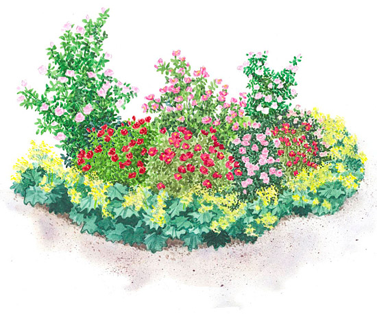 Easy care rose garden plan for Easy perennial garden plan