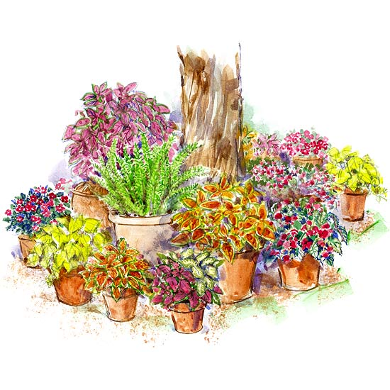 Shade Loving Container Garden Plan