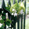 Decorate Your Fence