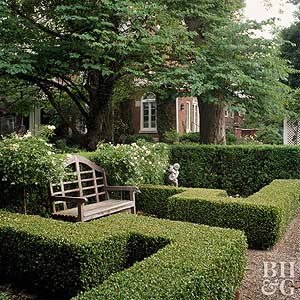 Best Plants for Hedges