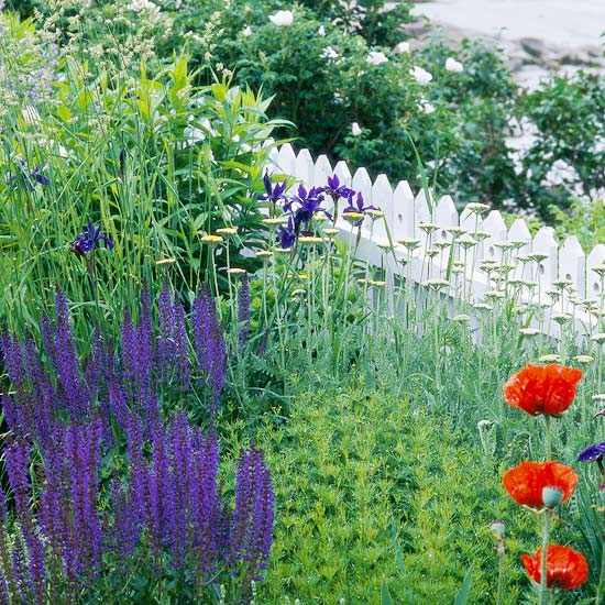 Top plants for seaside gardens for Flowers and gardens pictures