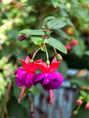 top annual plants for shady areas