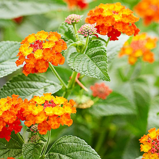 best orange flowers for your garden, Natural flower