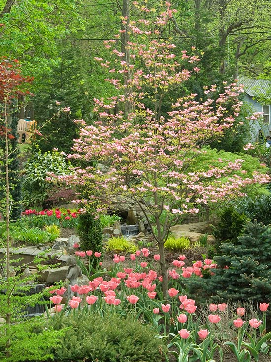 The best small trees for Popular small trees