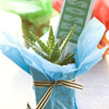 Southwest-Inspired Cactus Favors