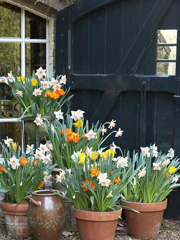 Plant Now: 19 Beautiful Bulb Combos to Try