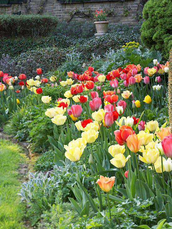 Beautiful bulb combinations for Spring bulb garden designs