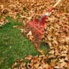 Remove Fallen Leaves