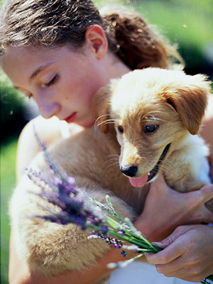20 Tips For Gardening With Dogs