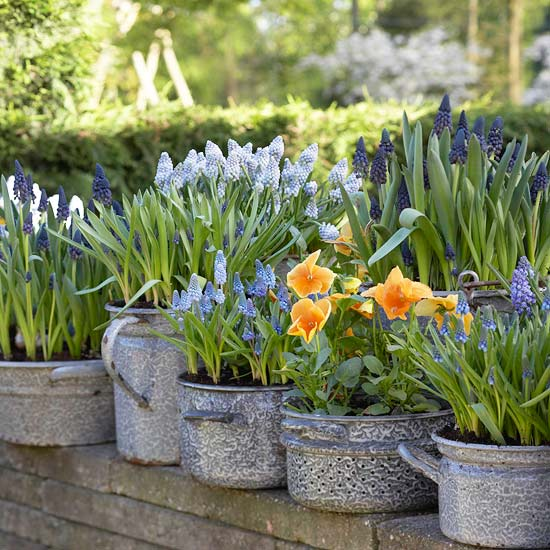Top Muscari for Your Garden