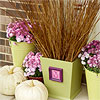 Monogrammed Planters