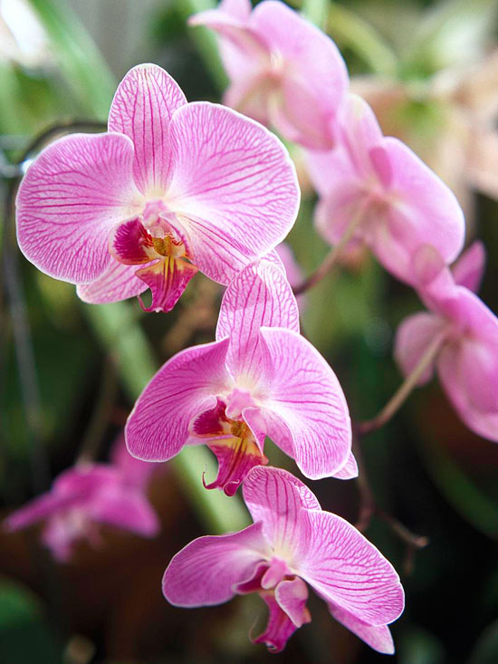 mwl : day orchid decor