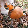 Junk Yard Dog Pumpkin