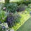 Grow Groundcovers