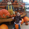 Loads of Pumpkin Fun