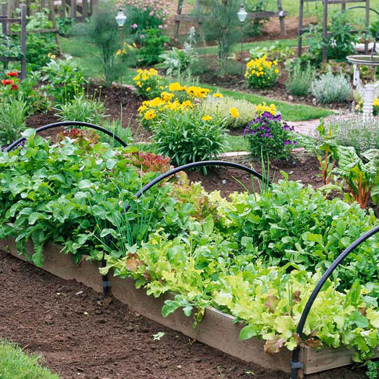 Benefit: Grow Longer in Raised Garden Beds