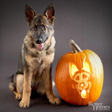 German Shepherd Pumpkin Stencil