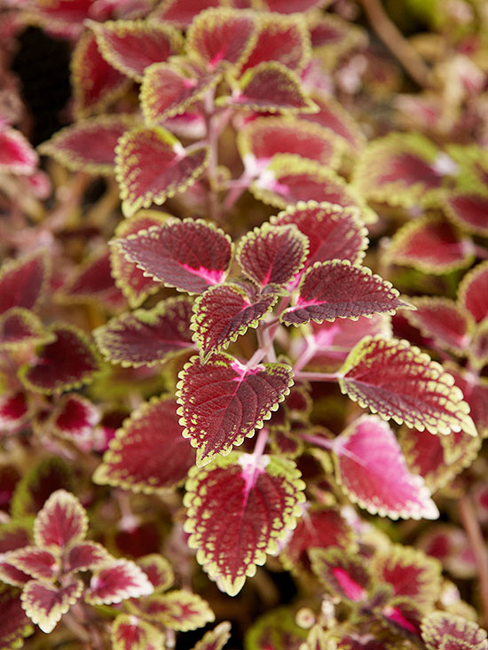 Houseplants – Better Homes and Gardens Plant Encyclopedia