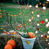 Fall Festive Lights