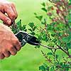 Prune Spring-Blooming Shrubs