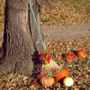 Pumpkins and Rake Decorations