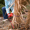 Cut Back Ornamental Grasses
