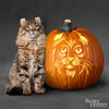 American Curl Cat Pumpkin