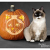 Birman Cat Pumpkin