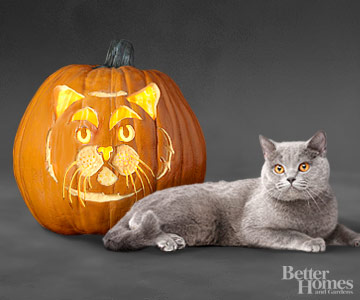 British Blue Cat Pumpkin Stencil