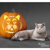 British Blue Cat Pumpkin
