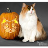 Norwegian Forest Cat Pumpkin