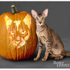 Oriental Cat Pumpkin
