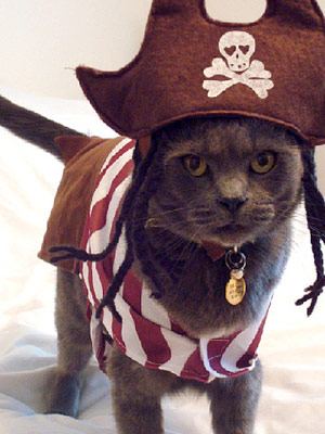 Your Best Photos: Cats in Halloween Costumes