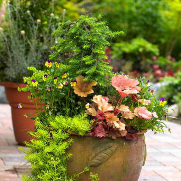 Find Your Perfect Container Garden