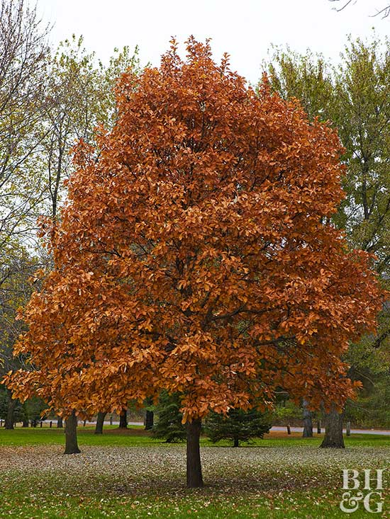 Tree Deals: How to Score Some Shade on a Budget