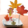 Fall Leaves in Beakers