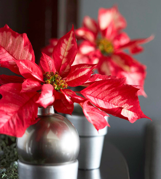 Pretty christmas flower arrangements for Poinsettia arrangements