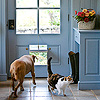 Spring for a Doggie/Cat Door