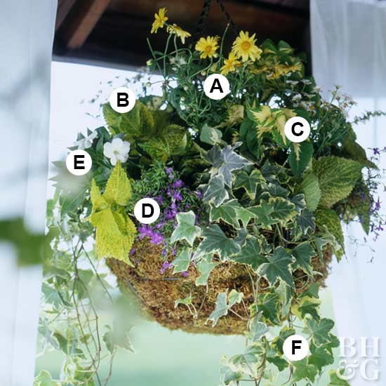 easy shade plants hanging basket for shade